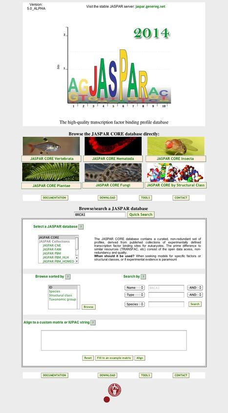 JASPAR - a database for defined transcription factor binding sites for eukaryotes | bioinformatics-databases | Scoop.it