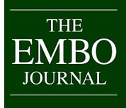 Pluripotency re-centered around Esrrb : Abstract : The EMBO Journal | SynBioFromLeukipposInstitute | Scoop.it
