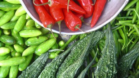 Urban Farming Model Takes Off In Boston Suburb   Planetizen   Market Growing   Scoop.it