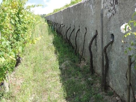 Visite au Clos Cristal à saumur champigny | Route des vins | Scoop.it