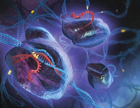 CRISPR: the next generation of genome editing t... | Multi- gene | Scoop.it