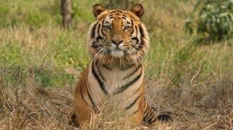 Tanganyika Wildlife Park - 911 Animal Abuse