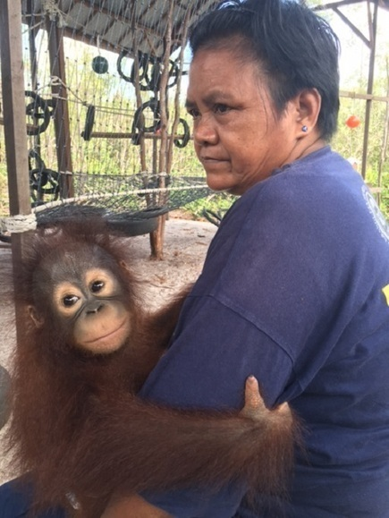 Indonesia's orangutans threatened by expansion of palm oil plantations | Oceans and Wildlife | Scoop.it