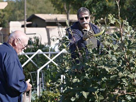 Phoenix-area gardens grow community and veggies   CALS in the News   Scoop.it