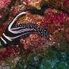 Diving wonders of Belize