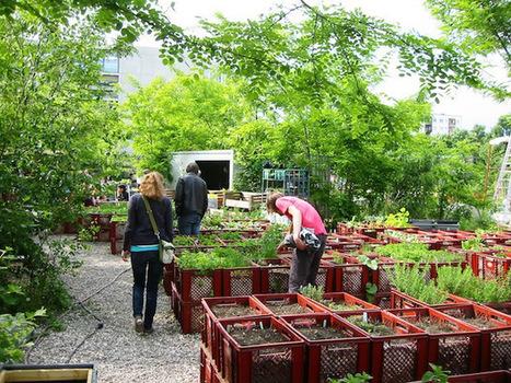 El impacto de la agricultura urbana en Berlín y Hong Kong | Cultivos Hidropónicos | Scoop.it