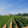 Des vacances d'exception pour les amateurs de vin de terroir