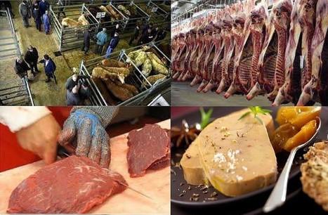 La filière viande en Nouvelle-Aquitaine : qualité et diversité | Agriculture en Dordogne | Scoop.it
