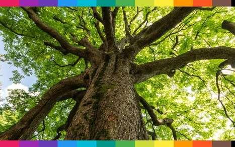 Sognare Soffitti Alti : Cosa significa sognare un albero caduto sradica