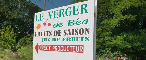 INRA - Circuits courts, du producteur au consommateur   Alimentation Santé Environnement   Scoop.it