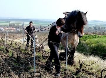 Champagne - Labour de Printemps ... Printemps, vaillant cheval ardennais - Le blog de Francis Boulard - Journal d'un vigneron de Champagne   En attendant septembre   Scoop.it