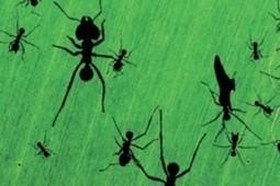Hormigas ocupan puestos de trabajo según su edad | Bichos en Clase | Scoop.it