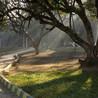 Votaw Tree Svc Inc