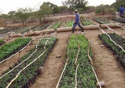 Tchad : le partage du foncier agricole avec des réfugiés tourne à la success story | Nouveaux paradigmes | Scoop.it