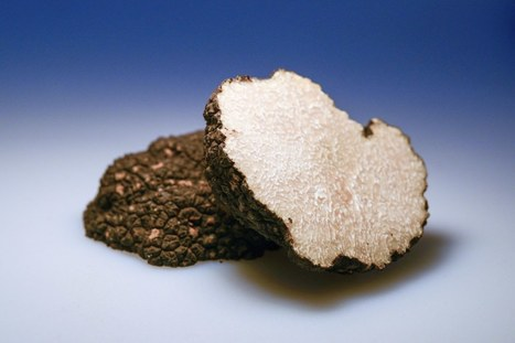 What can you do with a home DNA machine? One unexpected answer: grow better truffles | Organic Farming | Scoop.it