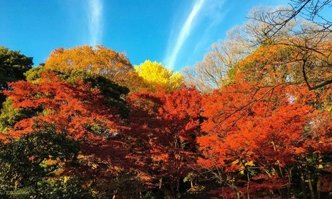 Tokyo's beautiful foliage: My top 5 Japanese gardens | Stripes Japan | Japanese Gardens | Scoop.it