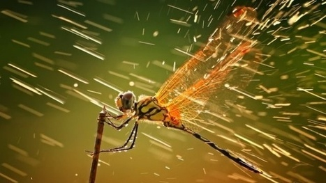 These Gorgeous Photos Are National Geographic's Best of 2011 | DSLR video and Photography | Scoop.it