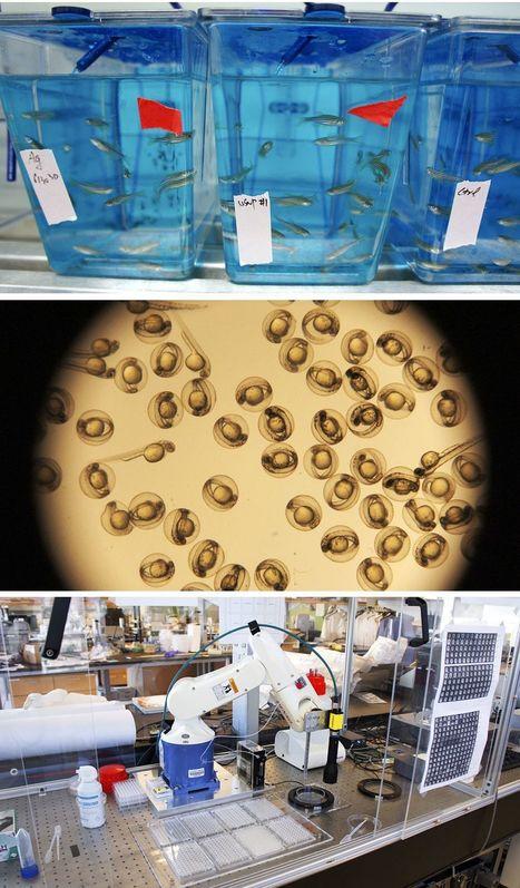 Nanomaterials - Fortune | this curious life | Scoop.it
