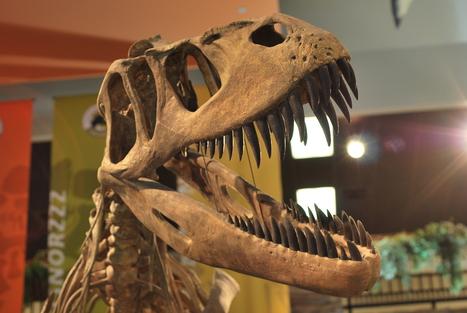 Paleontologists Discover a Hidden Dinosaur | Paleontology News | Scoop.it