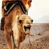 Culturele Studiereis Marokko