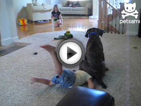 Quand nos enfants rencontrent nos amis les chiens, attention aux dégâts ! | Je ne suis pas maman... | Scoop.it