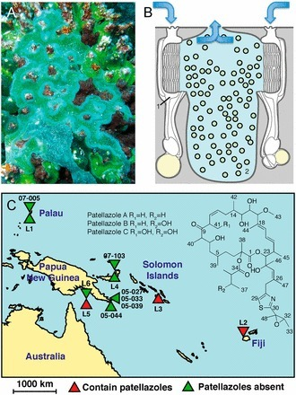 Genome streamlining and chemical defense in a coral reef symbiosis. Kwan et al. 2012. PNAS, 109, 50, 20655-20660. | BiotoposChemEng | Scoop.it