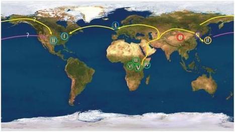 El virus del herpes confirma el origen africano del 'Homo sapiens' | Arqueología, Historia Antigua y Medieval - Archeology, Ancient and Medieval History byTerrae Antiqvae (Blogs) | Scoop.it