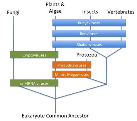 Unprecedented genomic diversity of RNA viruses in arthropods reveals the ancestry of negative-sense RNA viruses | Virology News | Scoop.it