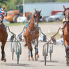 Standardbred Harness Horse Racing