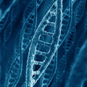 New DNA-Based Transistor Brings Us One Step Closer to True Human Computers | News we like | Genética humana | Scoop.it