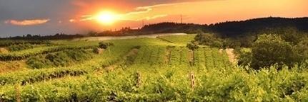 Le label vin bio européen   Vins bio   Scoop.it