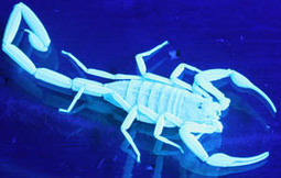 Treating A Scorpion Sting: $ 100 In Mexico Or $ 12,000 In U.S   Medical Tourism News   Scoop.it