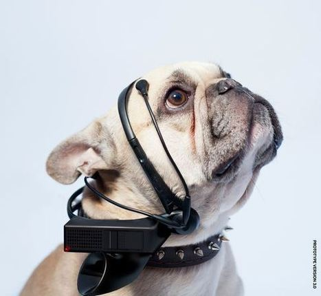 Dog-to-English translator to become reality? | No Such Thing As The News | Scoop.it