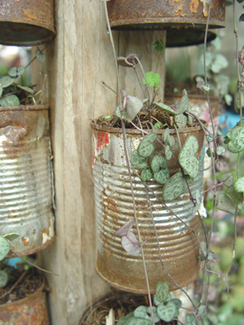 Free Pots For Plants Mexico Style | Botany Whimsy | Scoop.it