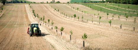 Agroforesterie : la méconnaissance de cette pratique reste un frein à son développement | Développement durable en France | Scoop.it