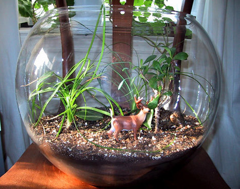 HOW TO: Make your own terrarium   Online resources relevant to Design and Technologies Education - Designing for the future   Scoop.it