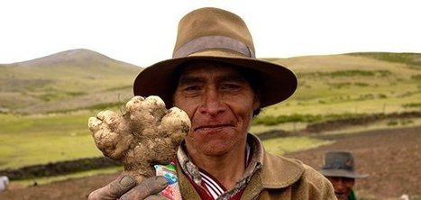 Farming Like the Incas | AP HUMAN GEOGRAPHY DIGITAL  STUDY: MIKE BUSARELLO | Scoop.it