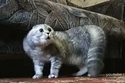 Another NONONONO Cat | Les chats c'est pas que des connards | Scoop.it