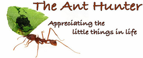 """The Ant Hunter: """"Social Chromosome"""" Found in Fire Ants 