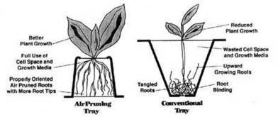 Development and construction of an air-pruning propagation bench, and its proper use | Think Like a Permaculturist | Scoop.it