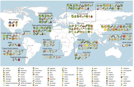Origins of food crops connect countries worldwide | Effectors and Plant Immunity | Scoop.it