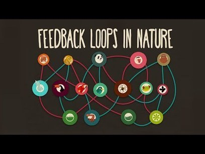 Feedback loops: How nature gets its rhythms - Anje-Margriet Neutel | Simplifying Complexity | Scoop.it