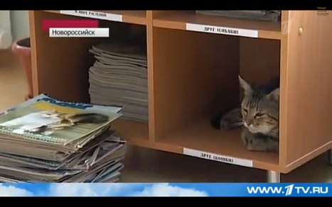 Oh My God, There's A Cat In Russia That Wears A Bow Tie And Works As A Librarian | Interwebby goodness | Scoop.it