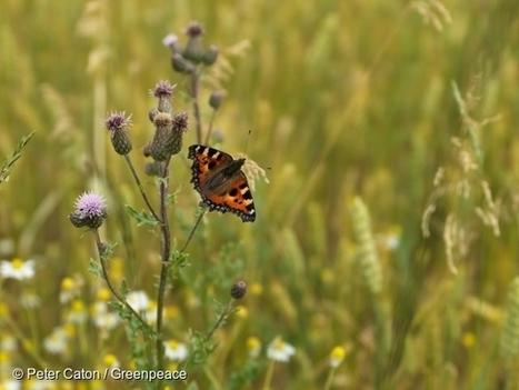 Pesticides néonicotinoïdes : les pollinisateurs ne sont pas les seuls à être menacés | Toxique, soyons vigilant ! | Scoop.it