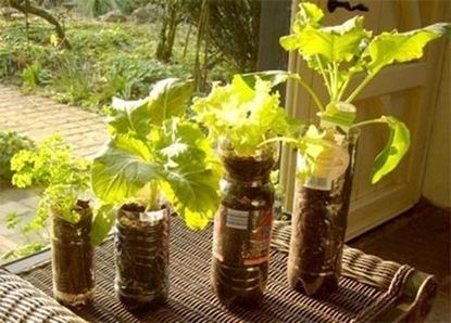 Agricultura urbana. Recipientes   Reutilizando   Cultivos Hidropónicos   Scoop.it