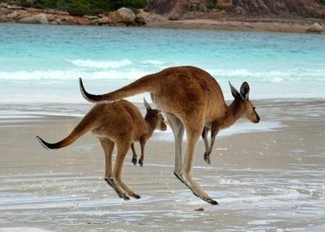 Travel Australia, and Make Money doing it! | World Insider | World Insider Blog | Scoop.it