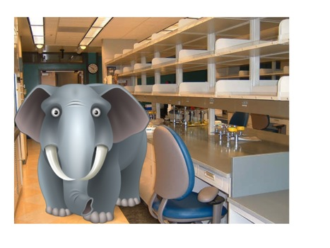 The scientist's guide to insulting other scientists: elephant in the lab series | Knoepfler Lab Stem Cell Blog | Biocapax | Scoop.it
