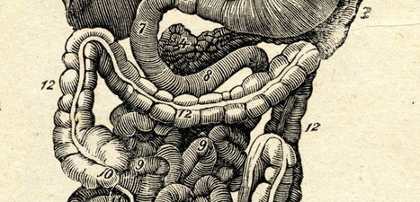 Meet Your Second Brain: The Gut - Mindful | Embodied Wisdom & Cognition | Scoop.it