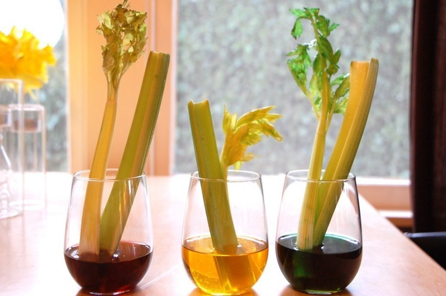 A Scientific Experiment with Celery and Food Co...
