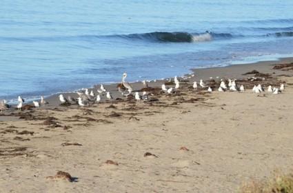 A Coastal Treat | Annie Haven | Haven Brand | Scoop.it